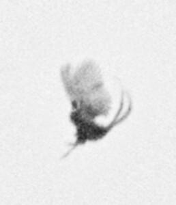Nicolai Howalt & Trine Søndergaard - Dying birds / How to hunt