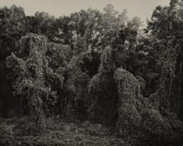 Helene Schmitz - Southern Landscape