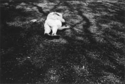 Jeremy Stigter - Tokyo 1993 - Yoyogi park
